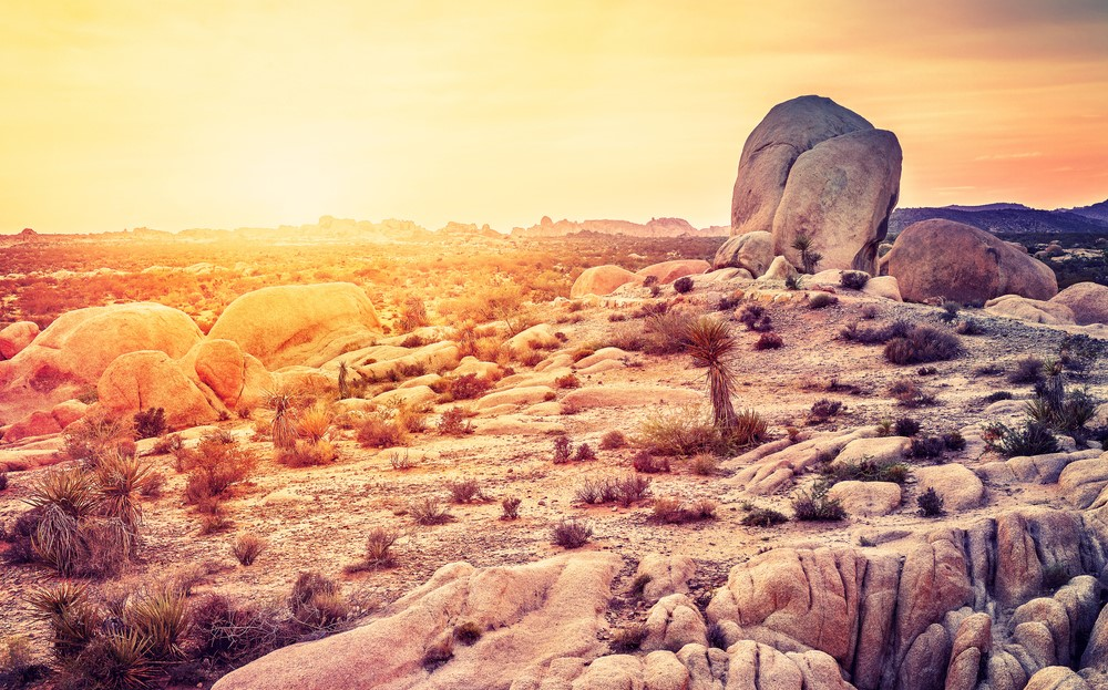 Is The Hidden Valley The Best Campground In Joshua Tree National Park?